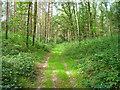 UPE3173 : Waldweg bei Prieschendorf by Sebastian und Kari