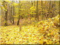 UUU7211 : Kladow - Herbstgold (Autumn Gold) by Colin Smith