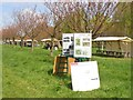 UUU8408 : Teltow - 12. Japanische Kirschbluetenfest (12th Japanese Cherry Blossom Festival) by Colin Smith