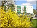 UUU8207 : Teltow - Fruehling in der Stadt (Springtime in Town) by Colin Smith