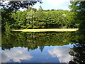 UUU8535 : Hubertussee - Frohnau by Colin Smith