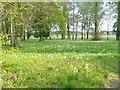 UUU5515 : Paretz - Schlosspark (Palace Park) by Colin Smith