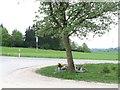 UNU7684 : Gerstetten - Gedenkstätte an ein Unfallopfer an der L1164 by gps-for-five
